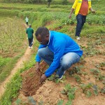 GICUMBI HOSTED SUCCESSFULLY THE SECOND WAVE FOREST LANDSCAPE RESTORATION CAMPAIGN.
